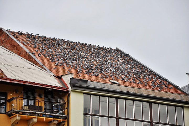 A2B Pest Control are able to install spikes to deter birds from roofs in Waltham Abbey.