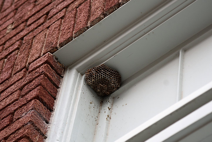 We provide a wasp nest removal service for domestic and commercial properties in Waltham Abbey.